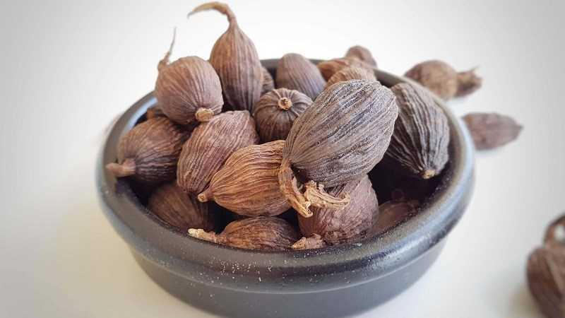 Bạch đậu khấu được sử dụng trong y h�c