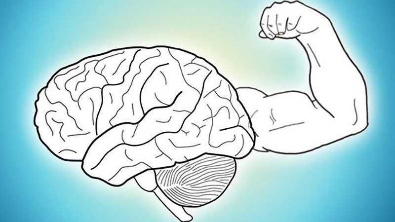 Quả mâm cơm cháy nếp giúp não khỏe mạnh