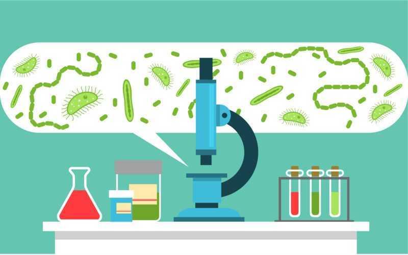 Chứa các hợp chất chống vi khuẩn