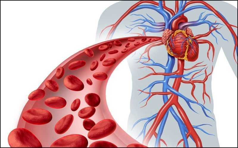 Hỗ trợ tuần hoàn máu và hô hấp