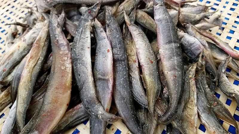 Cá vược khô