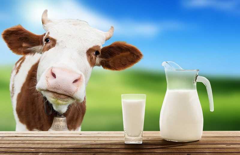 Dị ứng protein sữa bò