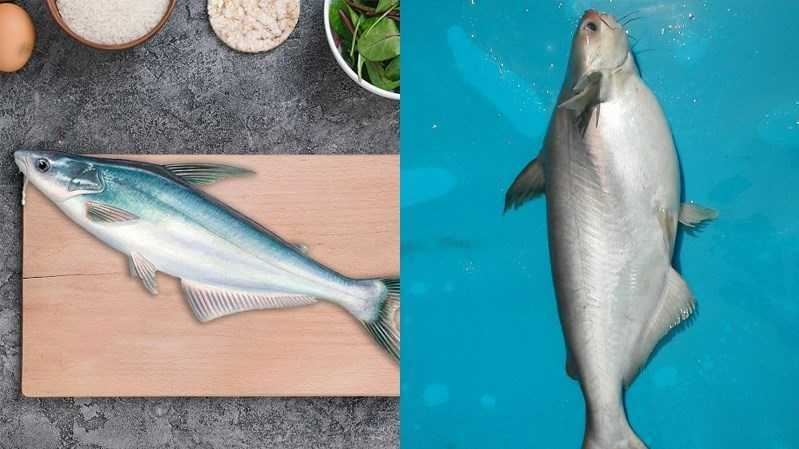 Cá dứa và cá ba sa có giống nhau không?