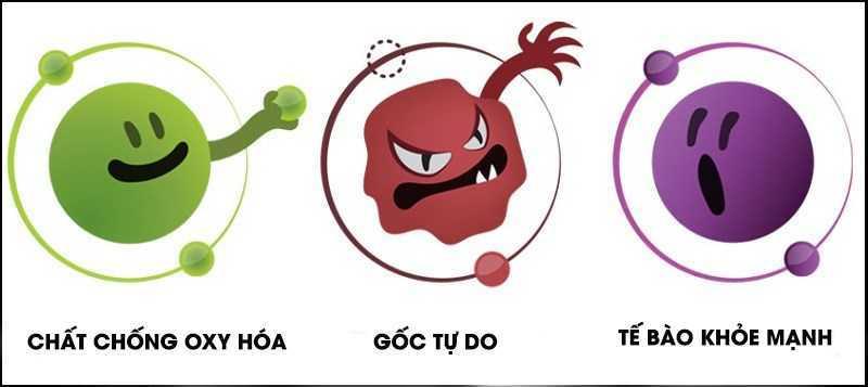 Kinh giới là một chất chống oxy hóa và chống viêm