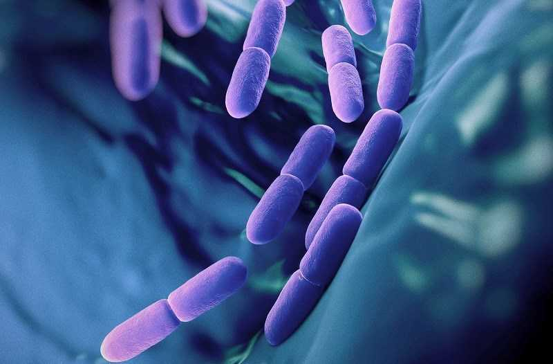 Nguồn lợi khuẩn dồi dào