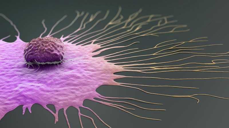 Giúp ngăn ngừa sự phát triển của ung thư