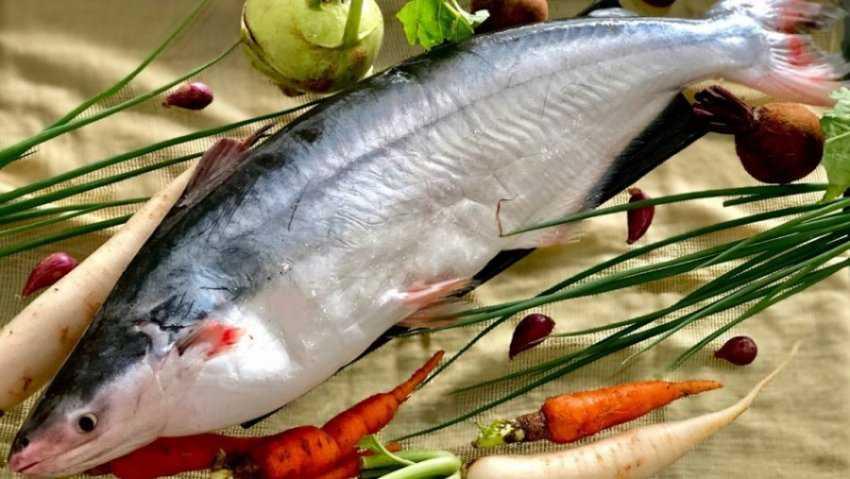 Cá dứa là cá gì