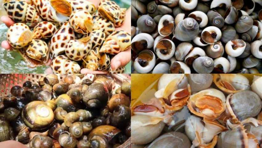 Ốc biển và ốc nước ngọt, ốc độc
