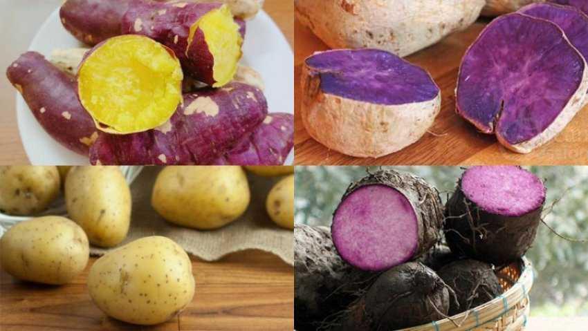 12 loại khoai tây