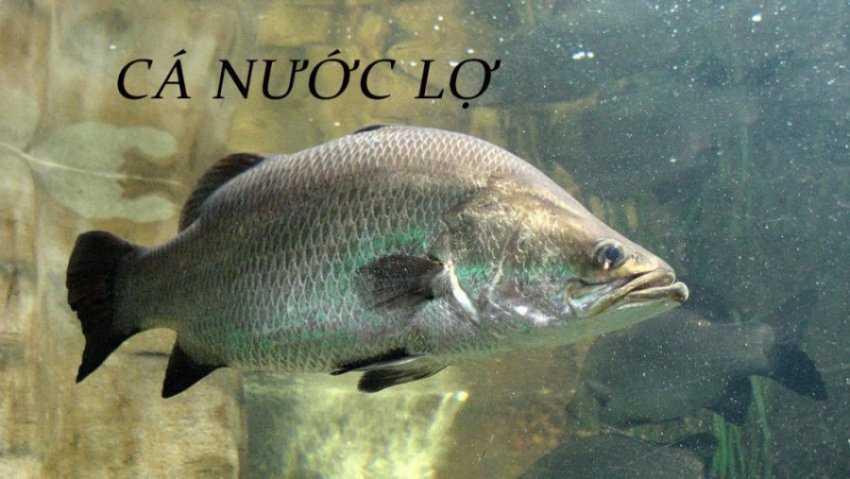 Sơ lược v� các loài cá nước lợ thư�ng gặp
