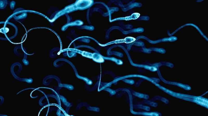 Cải thiện chất lượng tinh trùng
