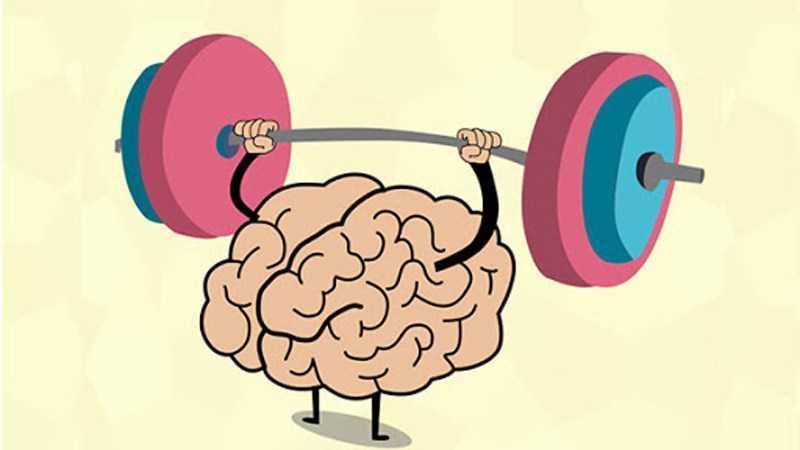 Đậu nam việt quất rất tốt cho não và hệ thống kinh tế