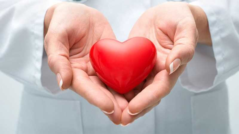 Ginkgo biloba cải thiện hệ tuần hoàn và tim mạch