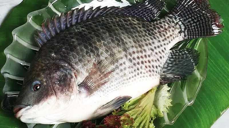 Cá rô phi là loại cá thịt trắng