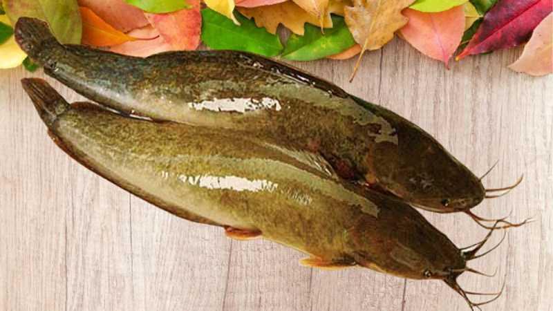 Cá trê là cá trắng