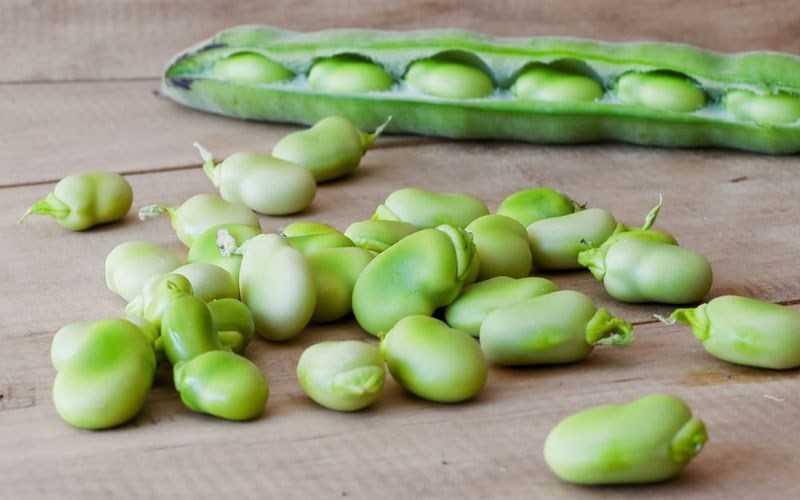 Hàm lượng dinh dưỡng của đậu lima