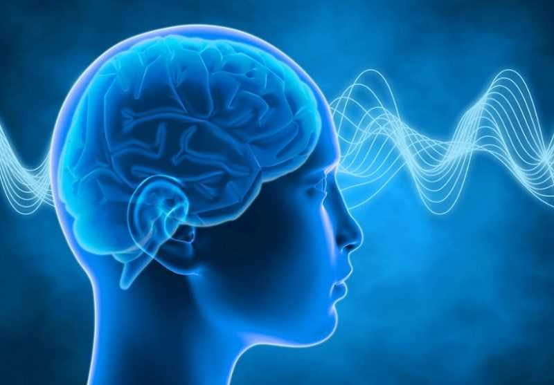 Hỗ trợ trí não