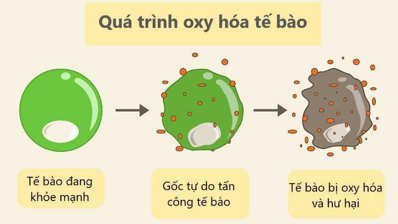 Quá trình oxy hóa