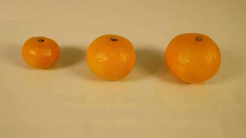 Dựa trên kích thước của quả