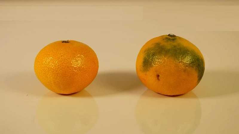 Dựa trên màu sắc của trái cây