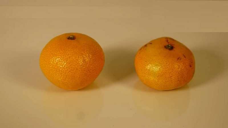 Dựa trên hình dạng trái cây