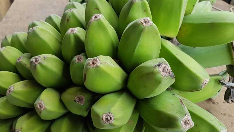 Banana saba là gì
