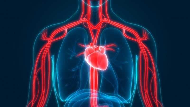 Cải thiện lưu thông máu
