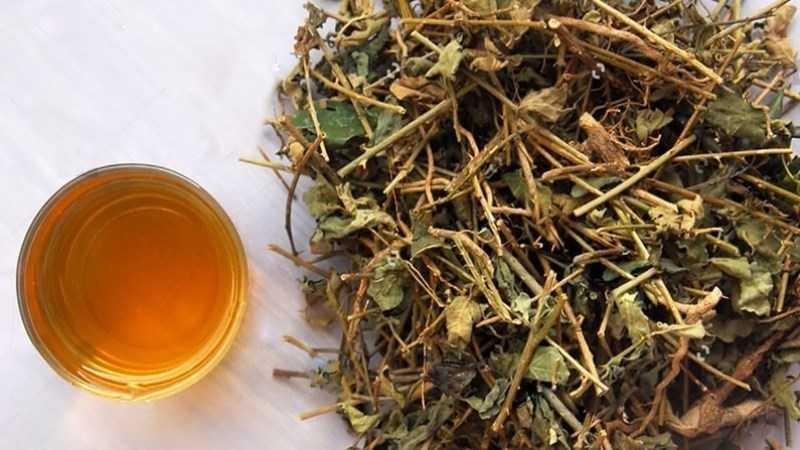Cách sử dụng trà gai dầu