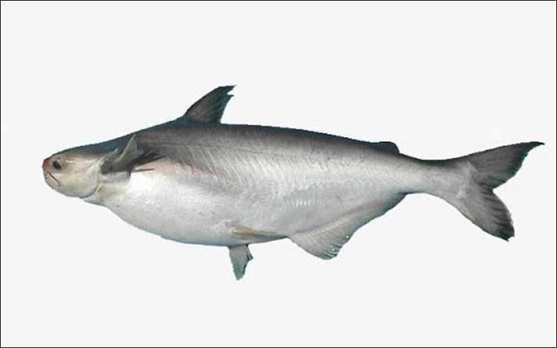 Bao nhiêu cá 1 kg?