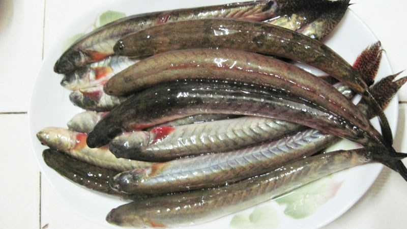 Làm sạch cá bống bằng nước nóng