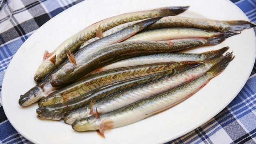 Cách chọn mua và làm sạch dầu cá kèo